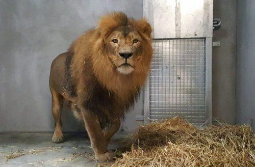Leeuw Dukat aangekomen