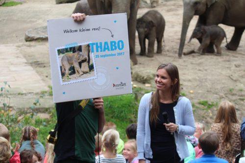 Olifantje heet Thabo