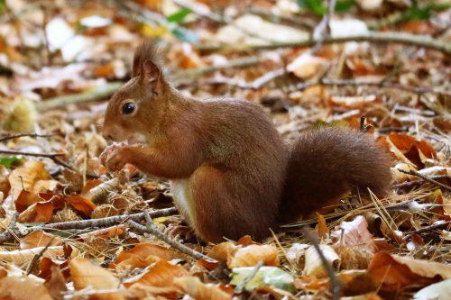 Bezoek van eekhoorns