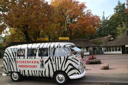 Iconische Zebrabus na 52 jaar terug op stal