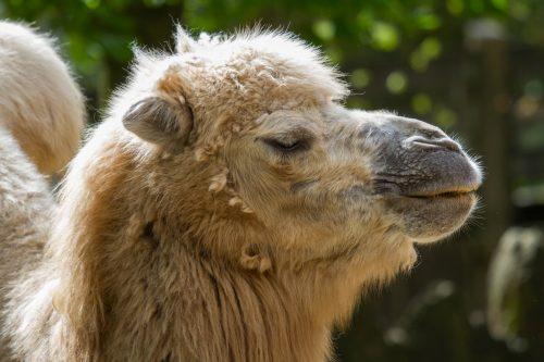 Verhuisbericht kameel Caz
