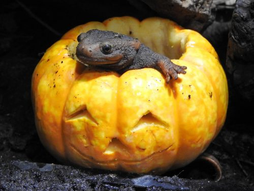 Halloween-verrassing voor dieren