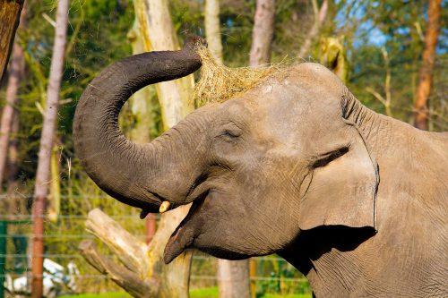 Kinderen steken neus in olifantenpoep